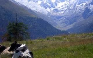 #EasyLoves | Vacanze in Valtellina