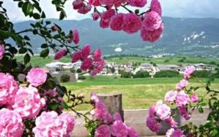 #EasyLoves | Vacanze in Val di Non